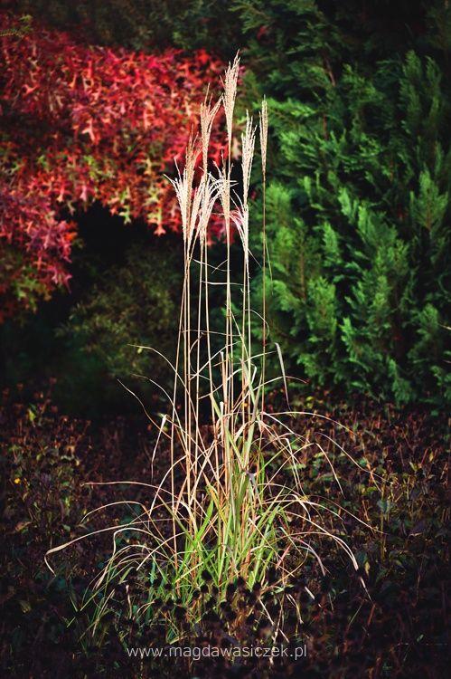 Arboretum Trojanow/www.barwyogrodow.pl