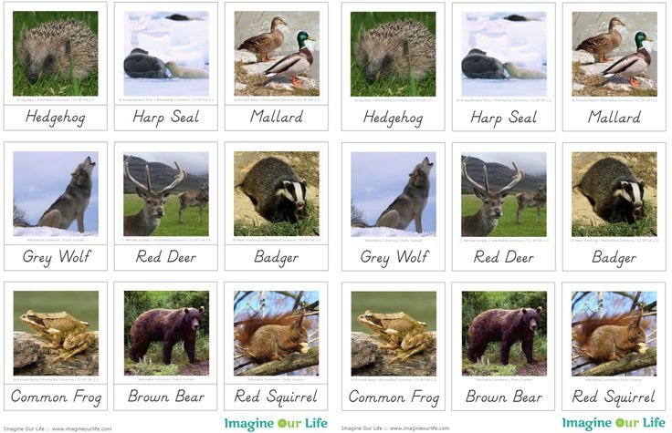 Animals of Europe for the Montessori Wall Map & Quietbook with Printables
