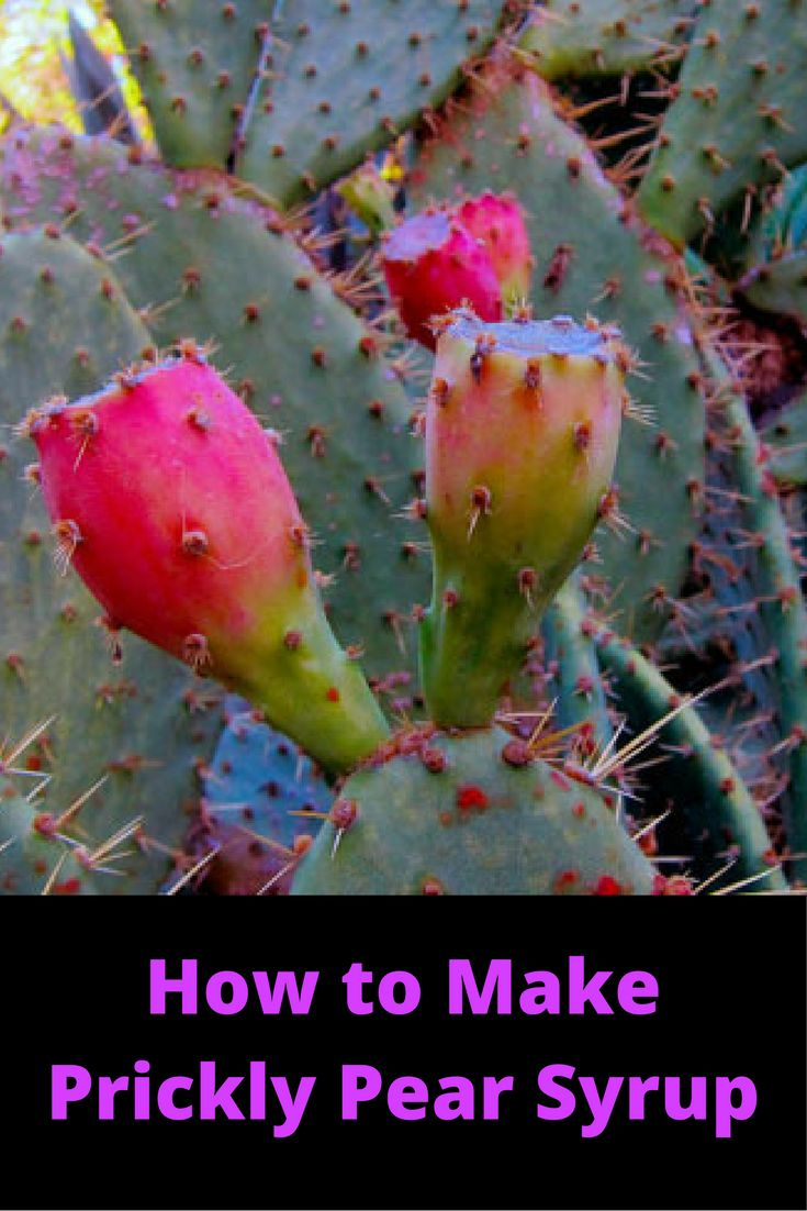 How to Make Prickly Pear Syrup