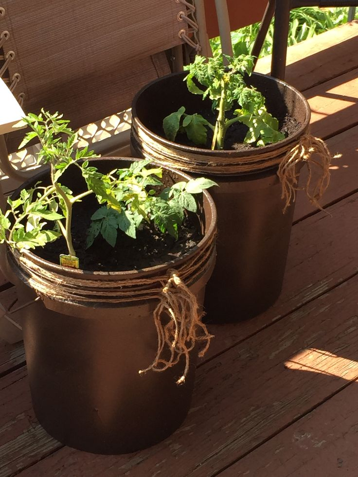 Diy 5 gallon bucket patio container tomato planter   Spray a 5 gallon bucket and add twine I used 4 cans of metallic textured spray paint on a home depot bucket
