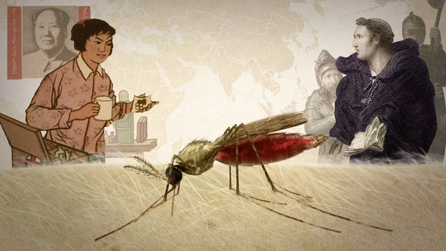 What do Jesuit priests, gin and tonics, and ancient Chinese scrolls have in common? They all show up in our animated history of malaria.  It's a story of geopolitical struggles, traditional medicine, and above all, a war of escalation between scientists and a tiny parasite. Malaria has proved to be a wily foe: Every time we think we have it backed into a corner, it somehow escapes.  Produced by  Adam Cole  Senior Producer  Ben de la Cruz  Production Assistance Michaeleen ...