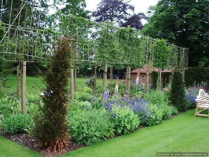 8 best pleached trees images on pinterest back garden for Landscape design courses christchurch nz