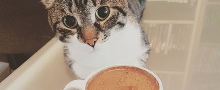 An Adorable Cat Cafe Is Opening Up This Week In Ottawa featured image
