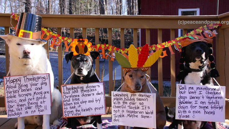 Happy Thanksgiving!  www.peaceandpaws.org