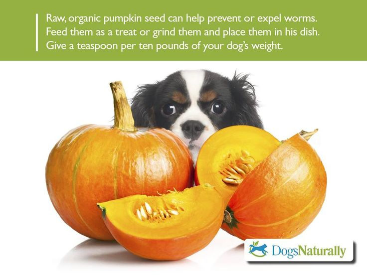 Pumpkin Seeds For Deworming Cats And Dogs