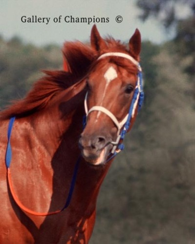 Secretariat is the greatest thoroughbred racing horse of all time.  The triple crown winner in 1973, his records still stand in the Kentucky Derby (Mile & Quarter, 1:59.2) and Belmont Stakes, (Mile and one half, 2:24) a win of 31 lenghts.  The Racing Form credits him with the Preakness record as well, but an official timing snafu cost him the record.  This dynamo had the greatest 3 year run in the history of horse racing.  The supreme runner in the Thoroughbred Pantheon non pareil.
