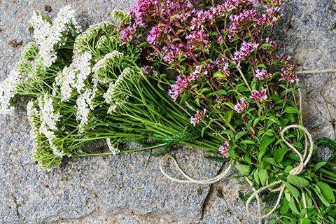 Infos und Tipps zur Schafgarbe Wirkung und Schafgarbe Anwendung: Die Schafgarbe ist eine altbekannte Heilpflanze, die es uns ermöglicht, auf natürliche ...