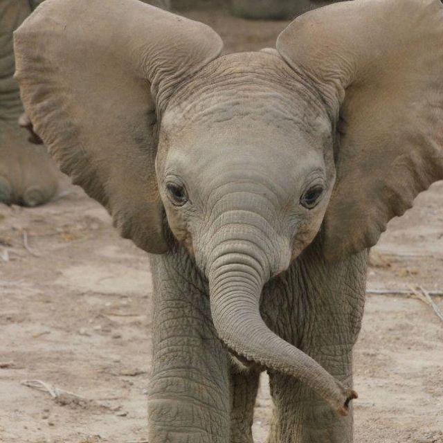 Amboseli Trust for Elephants