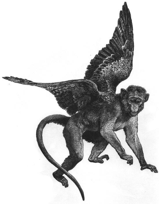 19 best images about flying monkeys on pinterest for Year of the monkey tattoo