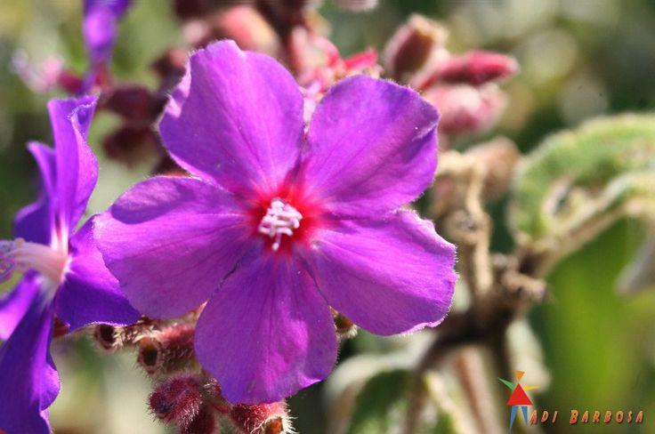 Flores de São Lourenço MG