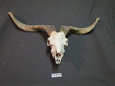Texas Hunting Ranches