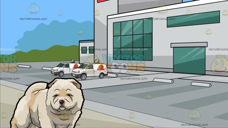 A Super Adorable And Huggable Chow Chow Dog With Outside A Tv Station Background:  An adorable dog with thick creamy white fur looking sleepy and so cute and A building with light gray exterior walls a huge parking area antennas and satellites green glass windows and a red logo situated on an open area and surrounded by green trees in the background with blue sky