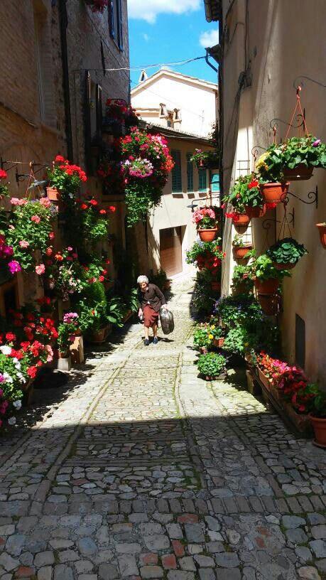 Just some flowers on the street... Spello, Umbria ITALY
