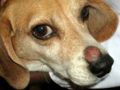 Ringworm in Dogs Home Remedy