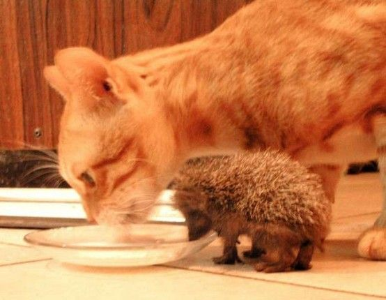 just 2 friends sharing a meal..