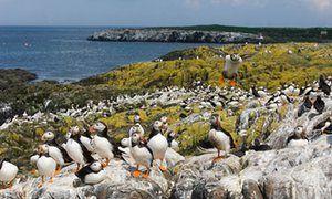 10 of the best British wildlife walks | Travel | The Guardian