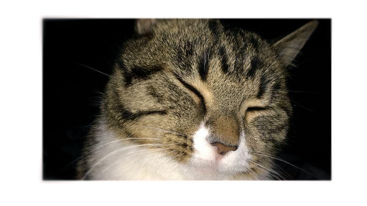Katter kitten pinterest for Location monte meuble paris