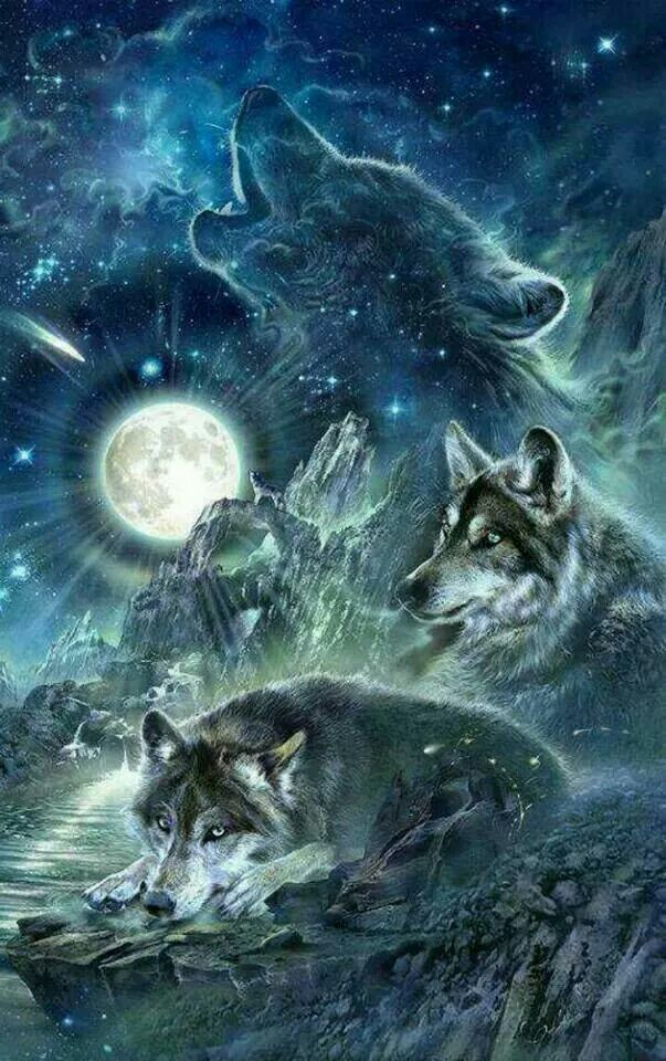 Beautiful Wolf Art