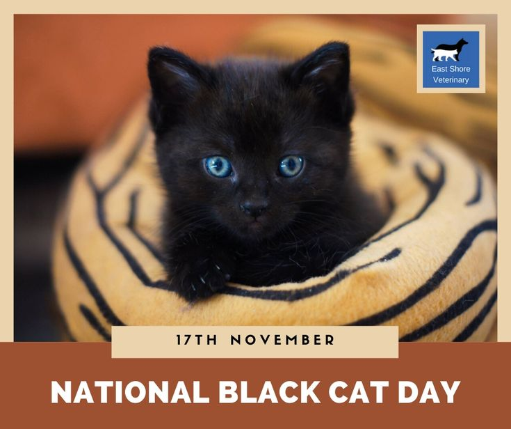National Black Cats Day Is Celebrated To Show How Awesome Black Cats Are Irrespective Of The Myths And Nonsense T Cat Day Black Cat Day National Black Cat Day