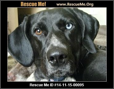 ― Minnesota German Shorthaired Pointer Rescue ― ADOPTIONS ― RescueMe.Org