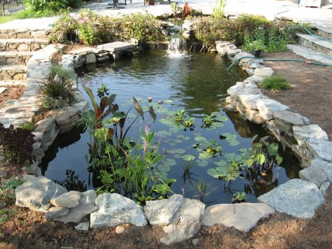 58 best images about water gardens on pinterest gardens for Backyard pond animals