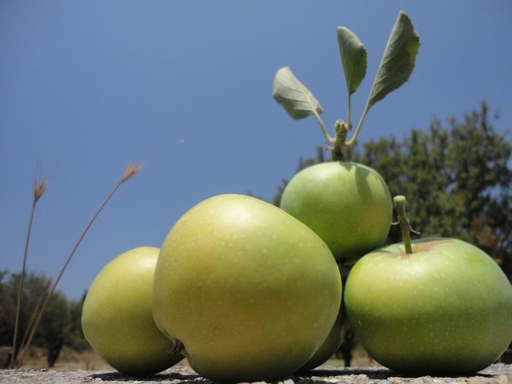 Stilleven appels in de natuur, eigen schaduw, licht donker contrast, zijlicht.
