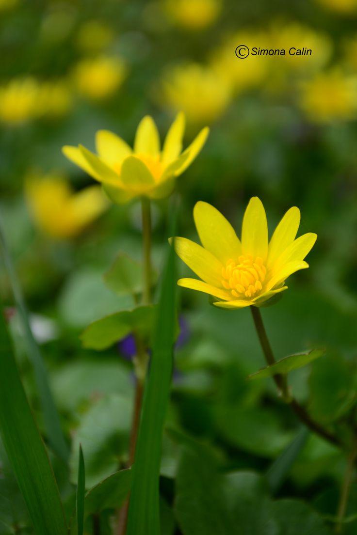 Yellow Love...