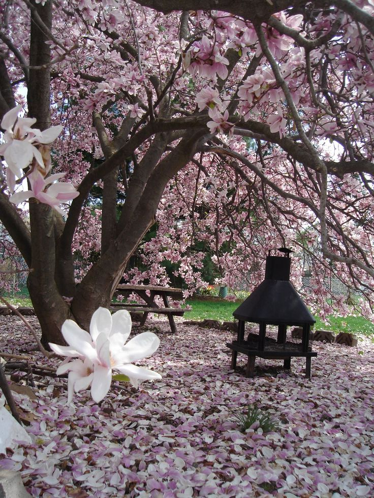 We had a Magnolia tree in my backyard growing up. So fragrant and lovely. This backyard looks like a dream!