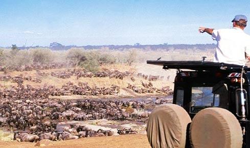 Masai Mara Migration 4x4 Game Drive Tour
