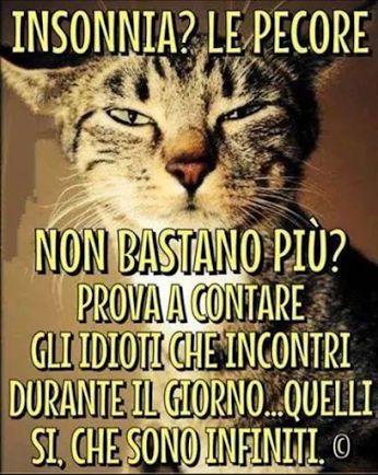 Come dare torto al gatto...!!
