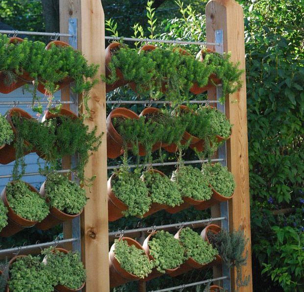 Need privacy diy garden privacy ideas gardens hanging for Domestic garden ideas