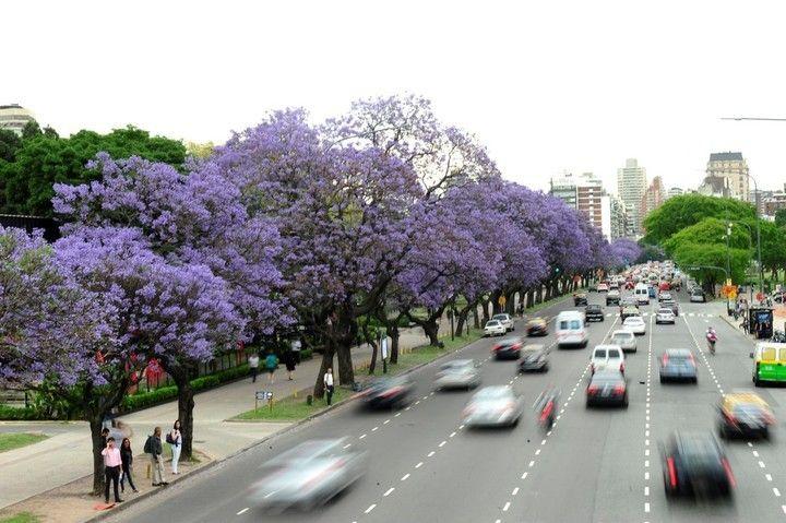 Los árboles porteños: la paleta de colores que pinta a la Ciudad