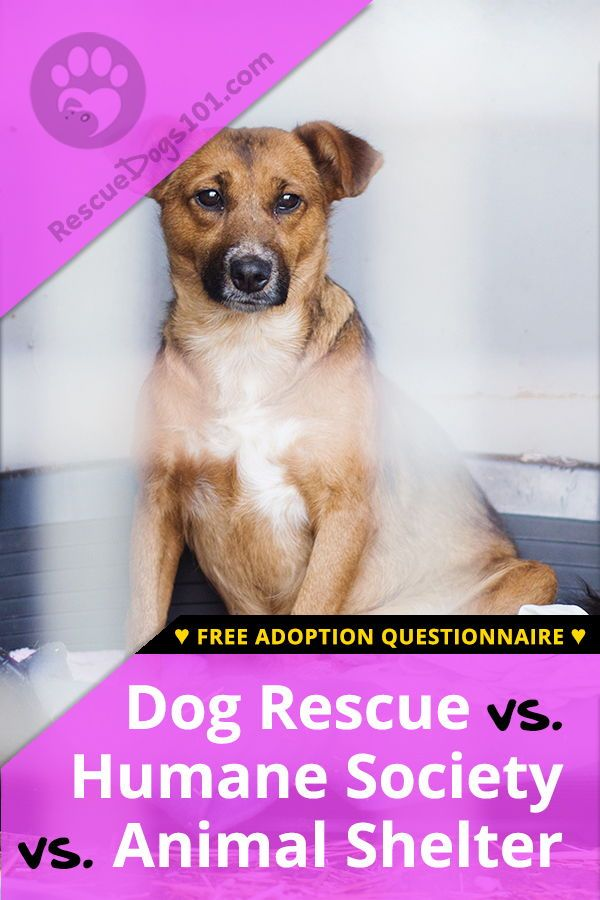 Humane Society Vs Animal Shelter Vs A Dog Rescue Rescue Dogs Dog Adoption Humane Society
