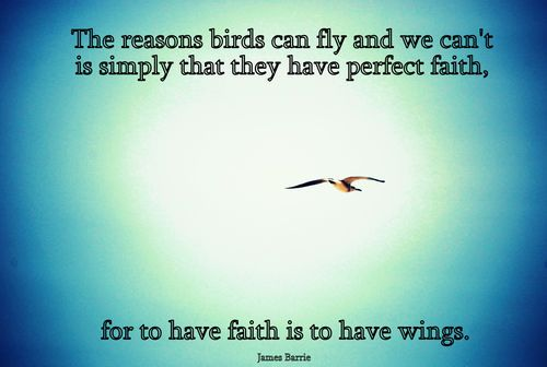 Wings (quotes,photography,bird,wings,faith,j.m. Barrie