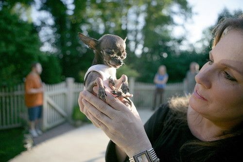 Ducky the World's Smallest Dog  They call him Ducky, but he is actually smaller then an average duck. Measuring at just 1.4 pounds (0.6 kg) and 5 inches (12.7 cm) tall, he was declared as the world's smallest living dog by the Guinness World Records.