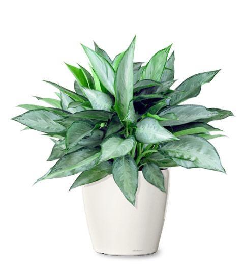 Best indoor plants trees by plantiquefl 21 design for Design of ornamental plants