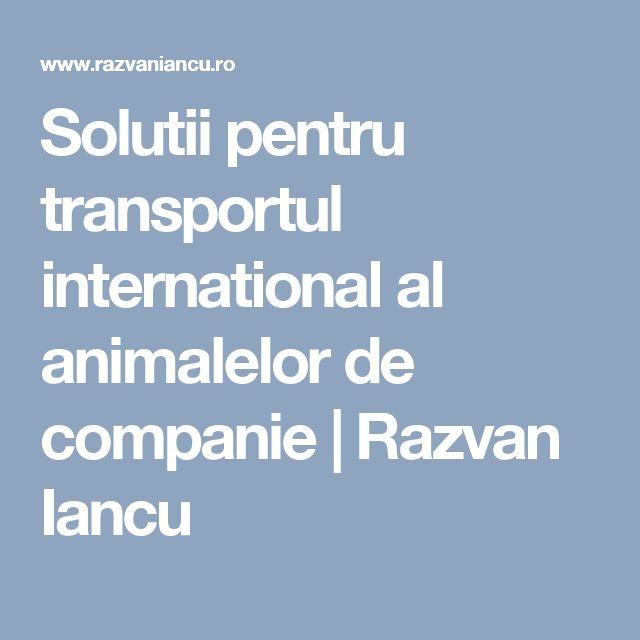 Solutii pentru transportul international al animalelor de companie | Razvan Iancu
