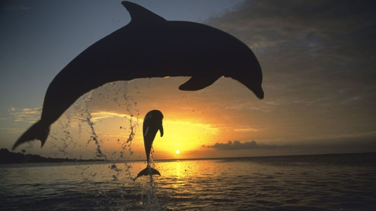 Chance of extinction for bottle nose dolphins