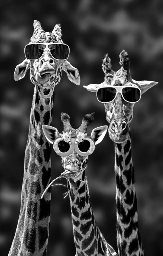 cool wallpapers  #divertido #engraçado #funny #girafas #Wallpaper #Background #Patterns #Print #PapelDeParede #Desenhos #Ilustrações