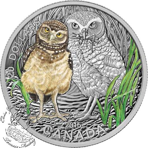 Coin Gallery London Store - Canada: 2015 $20 Baby Animals: Burrowing Owl Coloured Silver Coin, $99.95