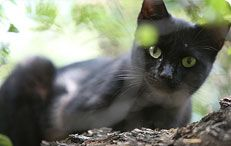 Alley Cat Allies website is filled with information on feral cats and how to protect them through TNR.