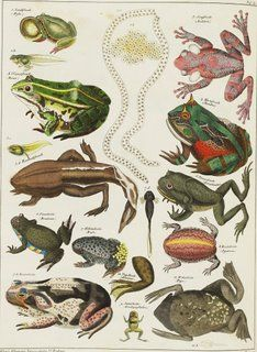 BibliOdyssey: Oken's Natural History Part II
