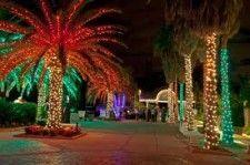 113 best christmas palmtree images on pinterest merry - Florida botanical gardens christmas lights ...