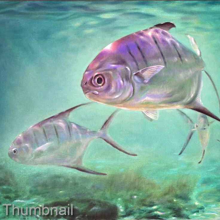 1000 images about paintings on pinterest for Florida pompano fish