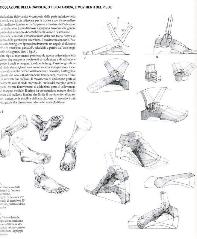 37 best Gottfried Bammes images on Pinterest | Human anatomy ...