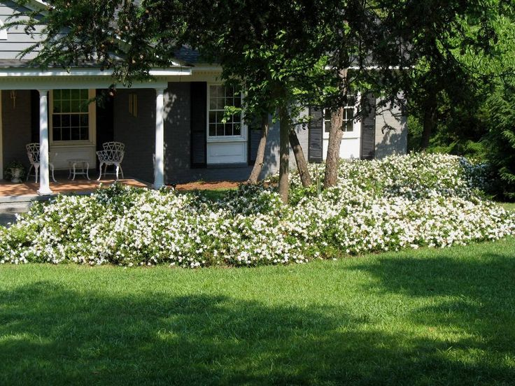 gardenia augusta 39 radicans 39 plant wish list pinterest. Black Bedroom Furniture Sets. Home Design Ideas