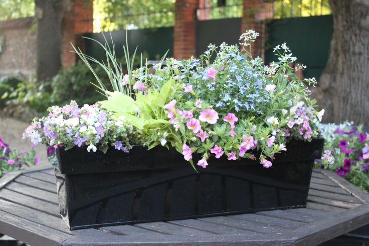 Jardinière fleurie livrée à domicile adaptée pour un balcon ensoleillé.  Jardinière à commander en ligne sur www.fleursaubalcon.com