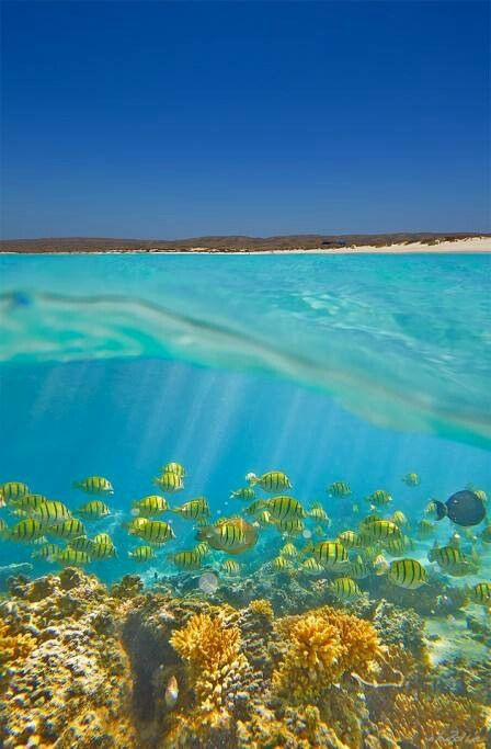 Ningaloo Reef is Australia's largest and most accessible fringing reef. Here you simply step straight off the dazzling white sandy beaches and enter an underwater wonderland of incredible diversity. Ningaloo Reef extends 10 nautical miles seaward and encompasses over 5,000 square kilometres of ocean. #BastienGchr