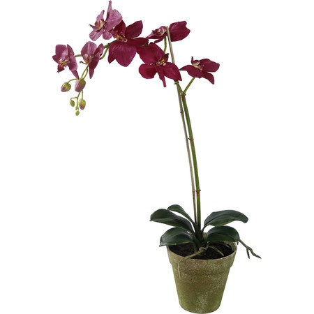 Faux potted phalaenopsis orchid vii home decor pinterest phalaenopsis orchid and orchids - How to care for potted orchids ...