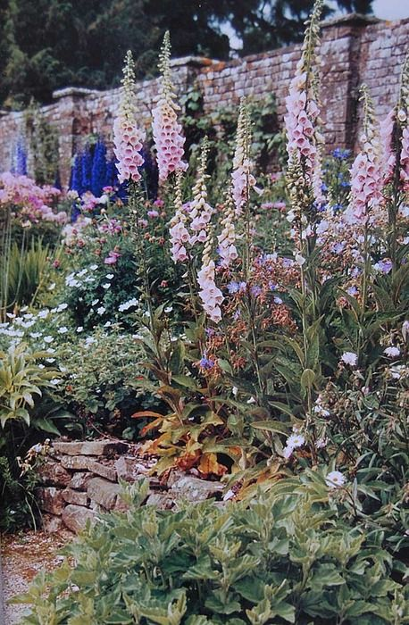Bohemian Path Tarot: Best 510 Down The Garden Path... Images On Pinterest